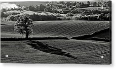 Tree And Shadow Acrylic Print