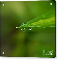 Acrylic Print featuring the photograph  Two Drops by Michelle Meenawong