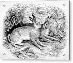 Two Hares Acrylic Print