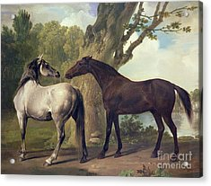 Two Horses In A Landscape Acrylic Print by George Stubbs