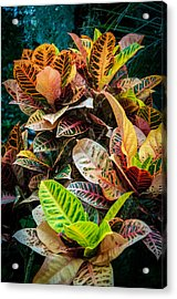 Variegated Plants Acrylic Print