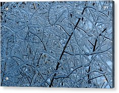 Vegetation After Ice Storm  Acrylic Print