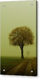 Acrylic Print featuring the photograph  Walk In The Fog by Franziskus Pfleghart