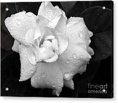 White Drops Acrylic Print by Michelle Meenawong