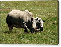 White Rhino Mother And Calf Acrylic Print by Aidan Moran