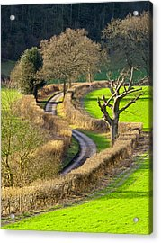 Winding Country Lane Acrylic Print