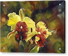 Yellow And Red Cattleya Orchids Acrylic Print