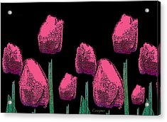 010 Hot Pink Tulips 2a Acrylic Print