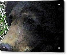 01042014 Black Bear Alaska Acrylic Print