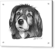 Acrylic Print featuring the drawing 027 - Miss Mindy by Abbey Noelle