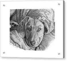 Acrylic Print featuring the drawing 033 - Molly by Abbey Noelle