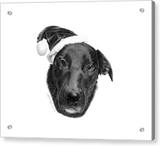 Acrylic Print featuring the drawing 039 - 2014 Emmie Christmas by Abbey Noelle