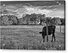 0570-223-bandw Acrylic Print