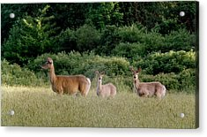 072506-3  Out For A Walk With The Twins Acrylic Print by Mike Davis