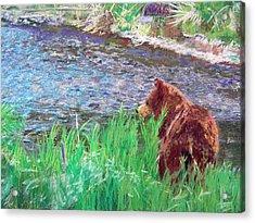 082714 Black Bear Pastel Acrylic Print