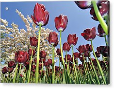 Acrylic Print featuring the photograph 090416p029 by Arterra Picture Library