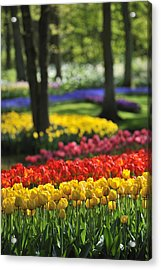 Acrylic Print featuring the photograph 090811p124 by Arterra Picture Library