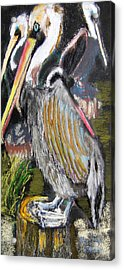 090914 Pelicans Acrylic Print
