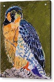 092914 Paragon Falcon Acrylic Print