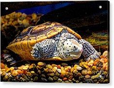 Sea Turtle Acrylic Print by Savannah Gibbs