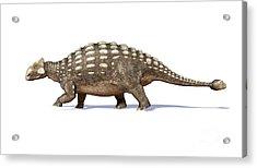 3d Rendering Of An Ankylosaurus Acrylic Print