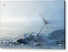 A Blue Morning Acrylic Print by Heidi Westum
