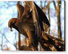 A Golden Eagle Acrylic Print by Raymond Salani III