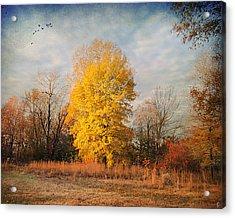 A Golden Moment Acrylic Print by Jai Johnson