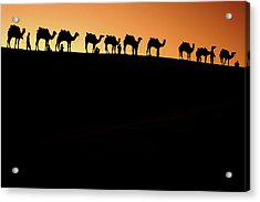 A Group Of Camel Herders Acrylic Print by Piper Mackay