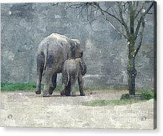A Mothers Love Acrylic Print by Sara  Raber