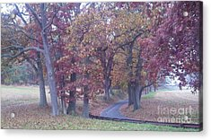 A Path To Follow Acrylic Print