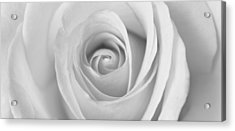 Acrylic Print featuring the photograph A Rose Is A Rose Is... by Silke Brubaker