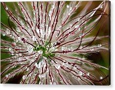 Abstract Macro Flower Head Acrylic Print