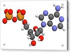 Adenosine Diphosphate Molecule Acrylic Print by Molekuul