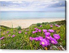 Aegean Sea Coast In Greece Acrylic Print by Elena Elisseeva