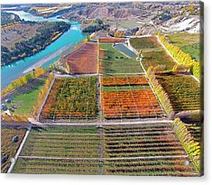 Aerial Over Autumn Orchards Acrylic Print by David Wall