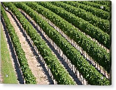 Acrylic Print featuring the photograph Aerial View Of Vineyard In Ontario Canada by Marek Poplawski
