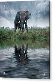 Africa, Kenya, Masai Mara Game Reserve Acrylic Print