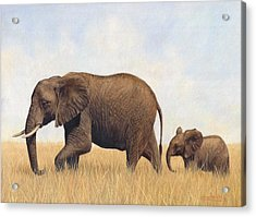 African Elephants Acrylic Print by David Stribbling
