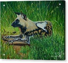 African Wild Dog Acrylic Print