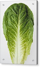 Agriculture - Closeup Of A Romaine Acrylic Print by Ed Young