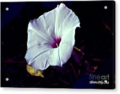 Alabama Wild Morning Glory Acrylic Print by Linda Cox