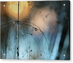 Almost Dark Acrylic Print by Heidi Westum