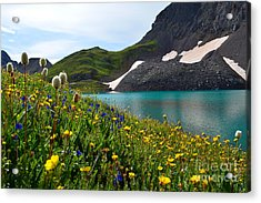 Acrylic Print featuring the photograph Alpine Flowers by Kate Avery