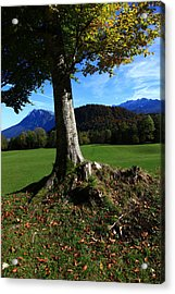 Alpine Tree Acrylic Print