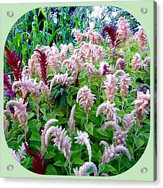 Amaranth Acrylic Print by Will Borden