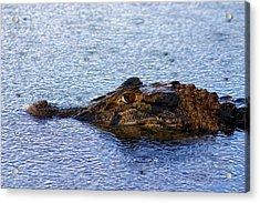 Acrylic Print featuring the photograph Amazon Alligator by Henry Kowalski