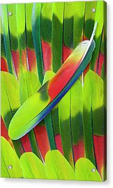 Amazon Parrot Tail Feather Design Acrylic Print by Darrell Gulin