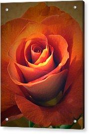 Amber Rose Acrylic Print