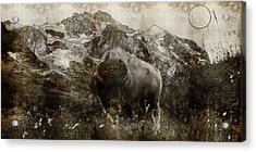 American Bison In The Rockies Acrylic Print by Adam Asar